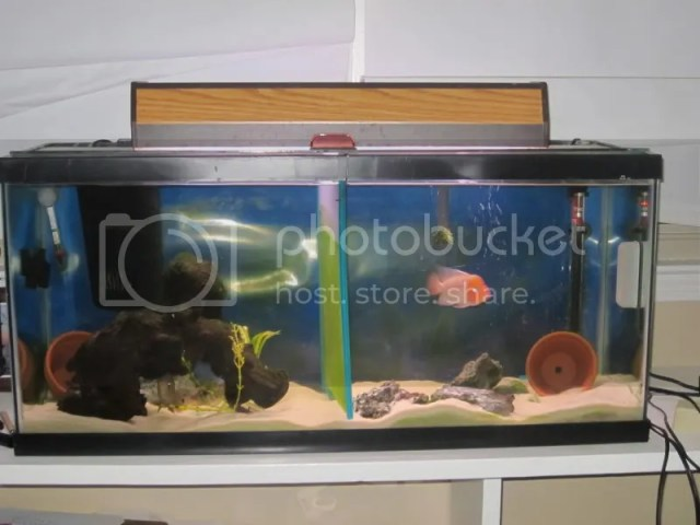 fish tank cheap - Thread: 20 and 30 gallon fish tanks, complete CHEAP ...