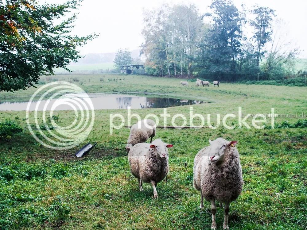 photo P1010584_zpsds9vngh6.jpg