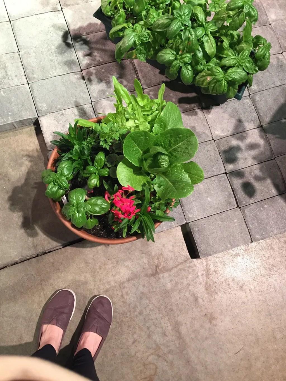 boston flower and garden show