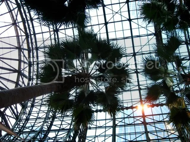 Palm trees at the World Financial Center Winter Garden