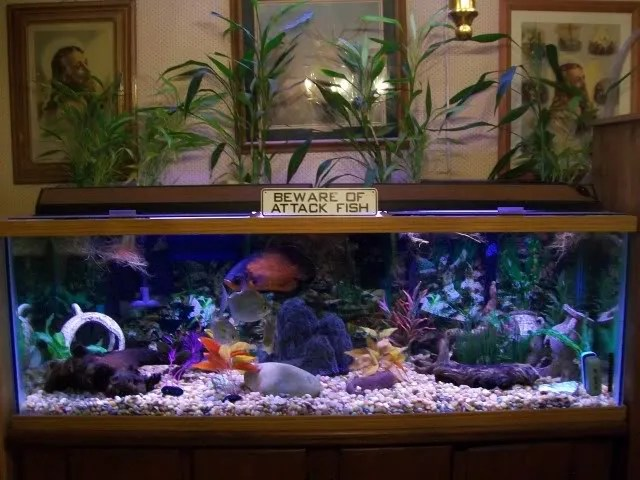 ... Go Back > Gallery For > Oscar Fish Tank 2017 - Fish Tank Maintenance