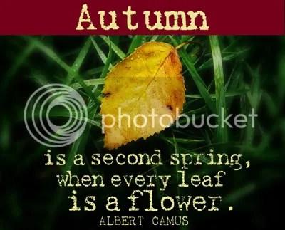 Fall Blog Post Photo
