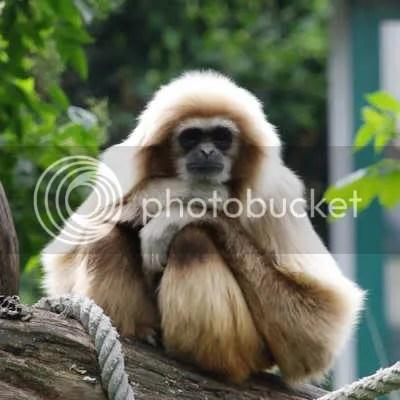monkey_thinking.jpg