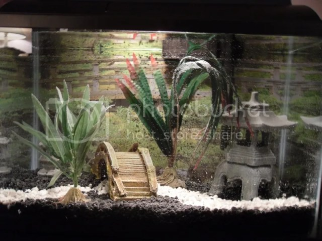 Harry Potter Fish Tank Decorations My roman ruins themed tank