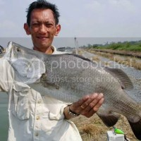 Barramundi Fishing at Boonma, Bangkok, Thailand
