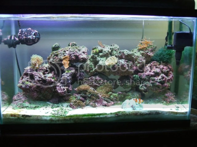 30 gallon native fish tank tanks a 30 gallon tank that for Saltwater fish for 10 gallon tank