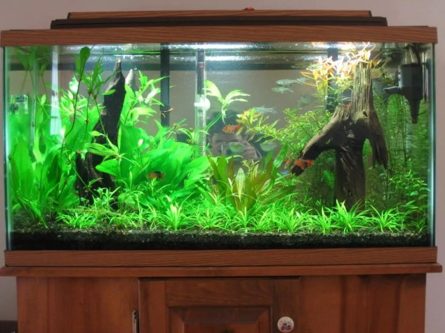 ever used a mirror as a background?   Aquarium Plants   Barr Report