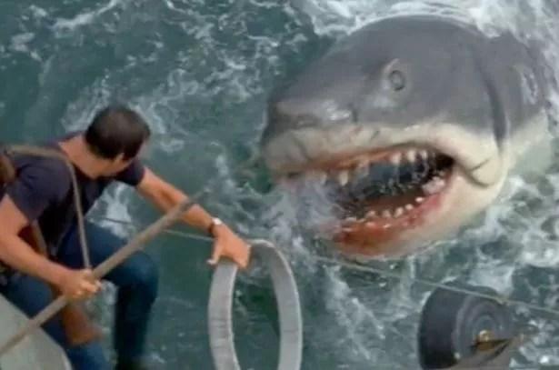 Hd Orca Wallpaper New Zealand Shark Attack Police Shoot Killer 12ft Great