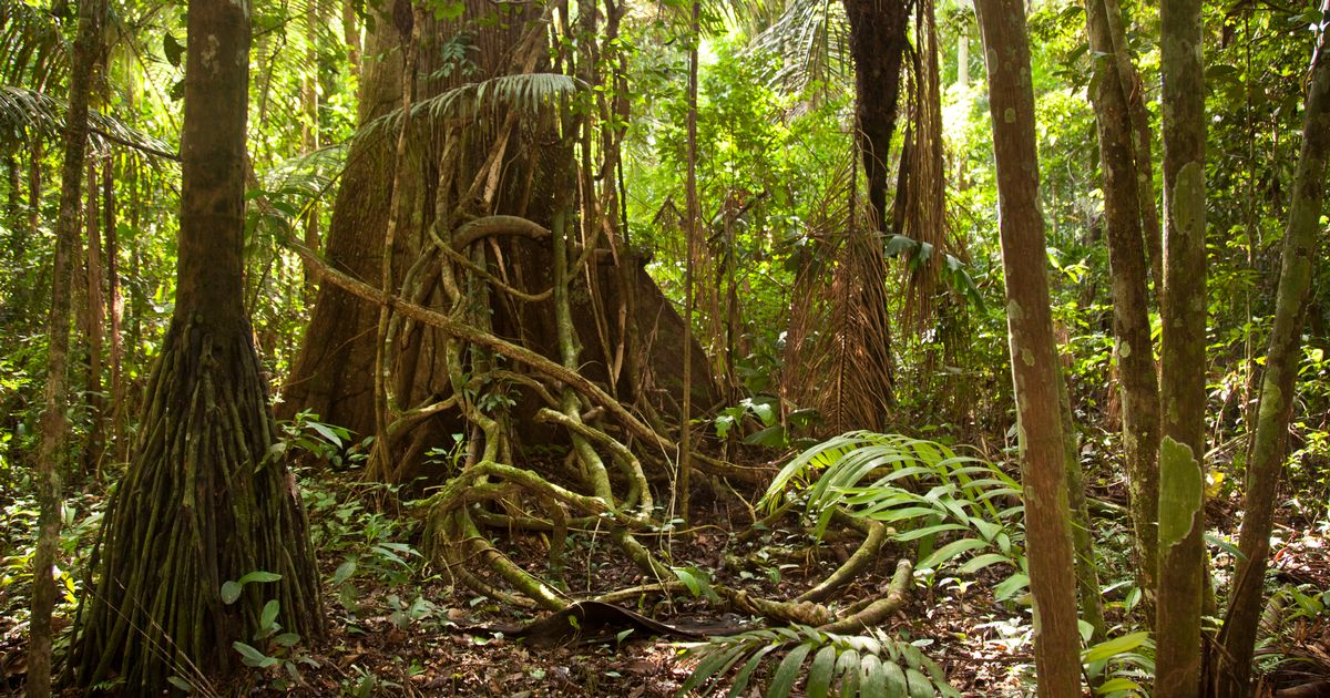 Wallpaper Predator 3d There Are 400 Billion Trees Growing In The Amazon