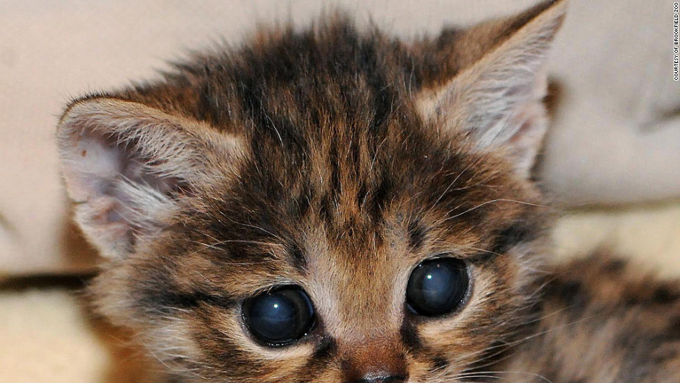 Cat Wallpaper Iphone Gallery Of Baby Animal