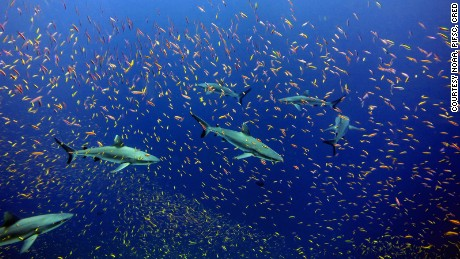 The Pacific Remote Islands -- twice the size of Texas -- is the largest marine reserve in the world.