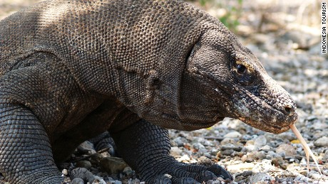 West Flores: So much more than Komodo dragons