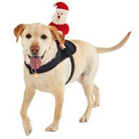 Christmas outfits for your pets