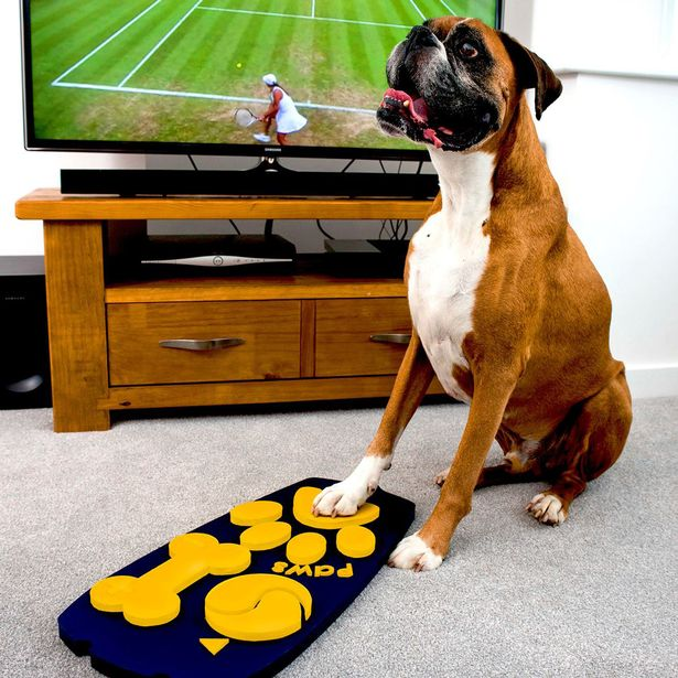 First ever dog TV remote
