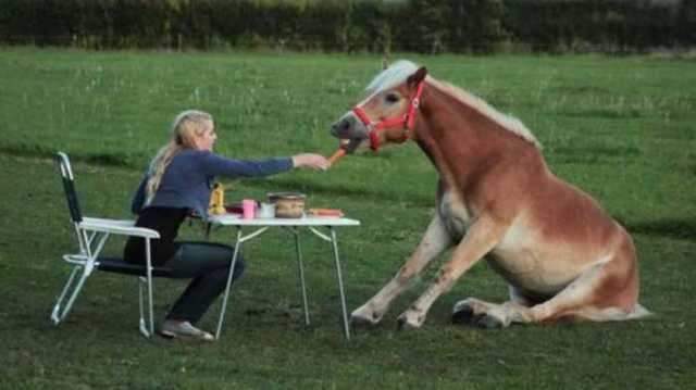 horse lunch