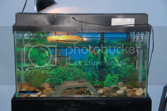 turtle tanks.. General Equipment Discussion Turtle Times Forums