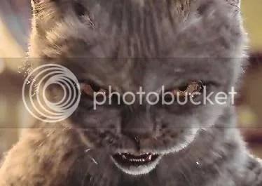 scary cat photo: evil cat scaryevil50.jpg