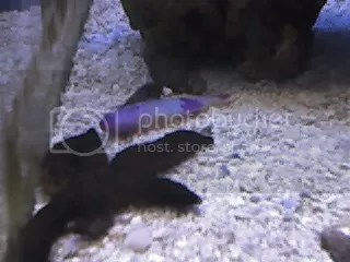 saltwater fish at petco petco saltwater fish saltwater