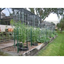 Small Crop Of Texas Tomato Cages