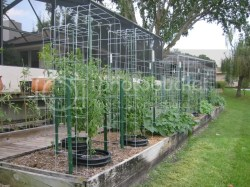 Artistic Just To Add Some Additional Se Cheap Last Container Tomato Questions Cages Texas Tomato Cages Diy Texas Tomato Cages Amazon