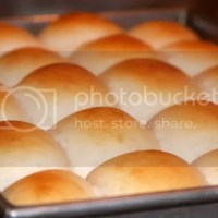 1 Bowl 1 Hour Perfect Dinner Rolls