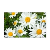 Summer daisies Wall Decal by imagineallartshop