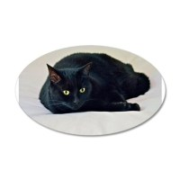 Black Cat! Wall Decal by harmonimages