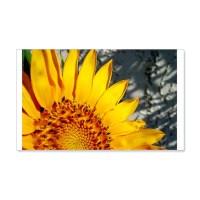 Sunset Sunflower Wall Decal by shards_sunflowr