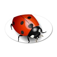 Shiny Ladybug Wall Decal by UnderTheSea2