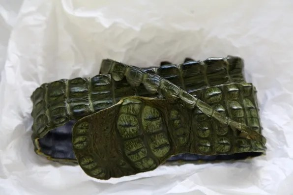 Crocodile belt from South Africa