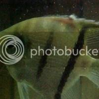 freshwater aquarium fish diseases and treatments