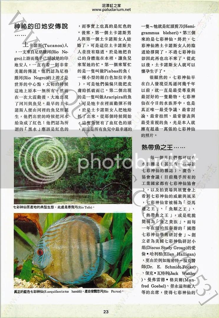 七彩神仙的歷史(上) - 沼澤缸之家