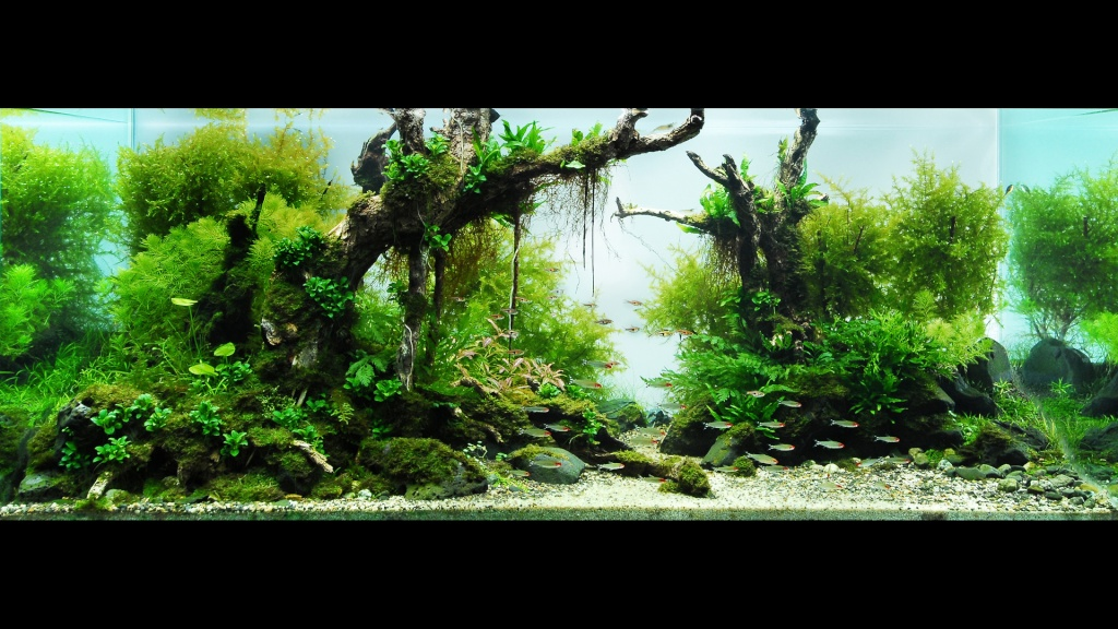 Aquarium 3d Live Wallpaper Pro R 233 Fection Ou Confection D Un Aquarium