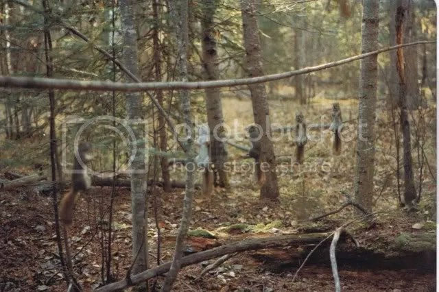 Snaring The Western Red Squirrel Trapperman Forums