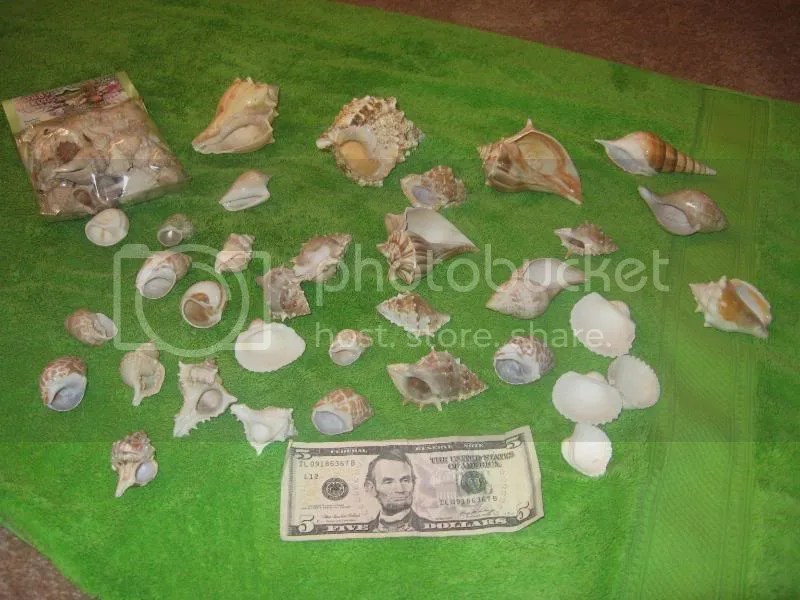 Traditional Colorful Patio Umbrella Design For Beautiful Patio Garden Ideas Cichlid-Forum • Shells for shell dwellers