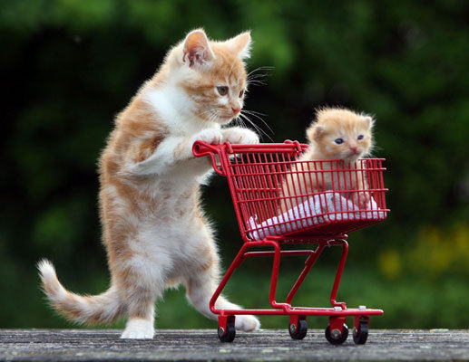 Super Cute Baby Cats Wallpaper Shopping Cat Style
