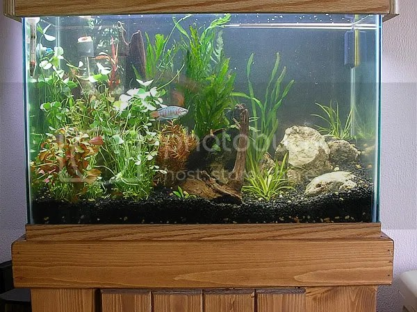 10 Gallon Aquarium Design Ideas Really interesting idea with the moss