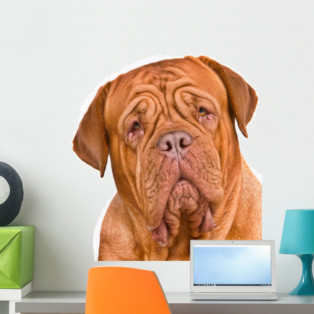 Stickers Bordeaux Dogue Bordeaux Portrait Wall Decal By Wallmonkeys Peel And Stick Graphic 36 In H X 33 In W Wm288882