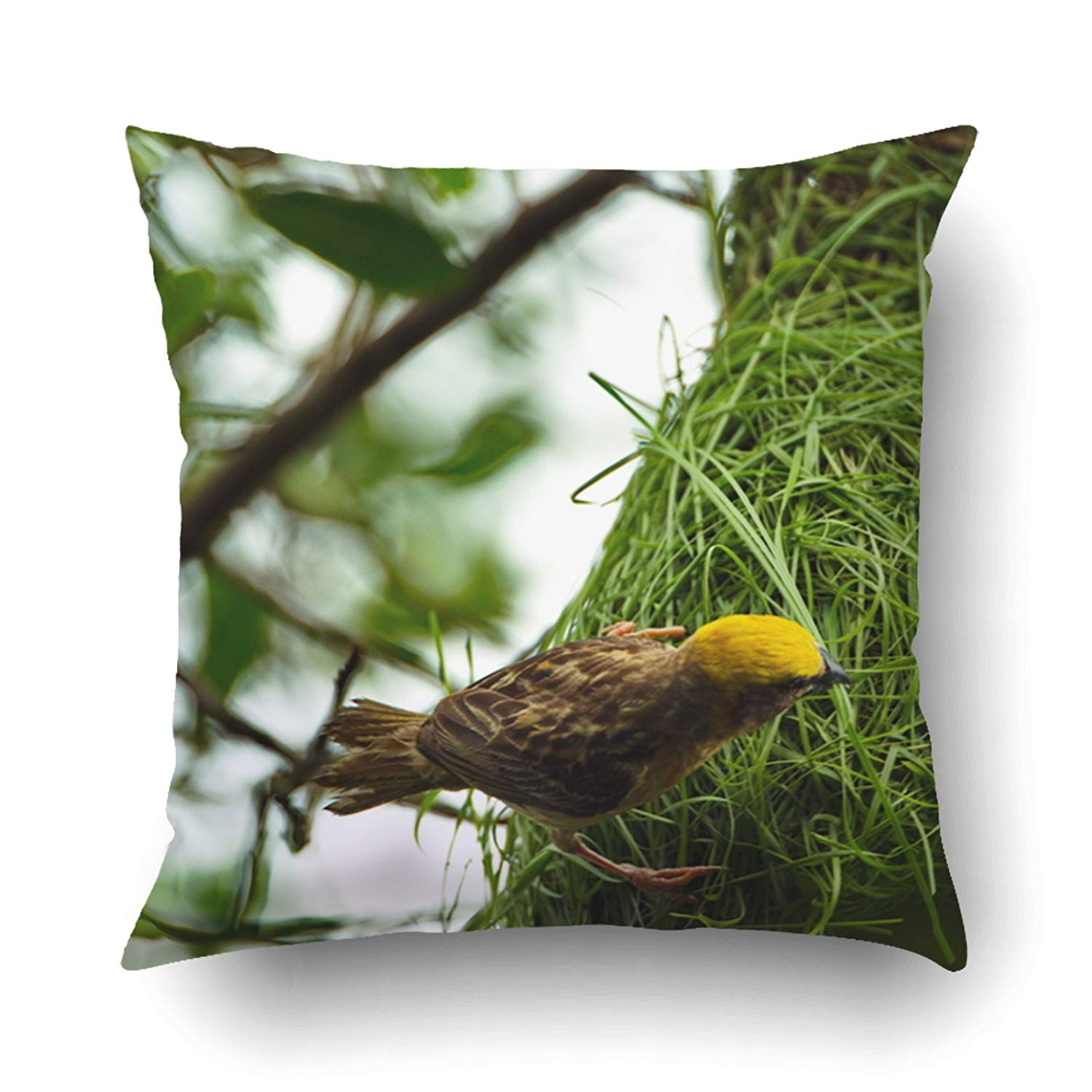 Bpbop Rice Bird From Thailand They Are Make The Nest From