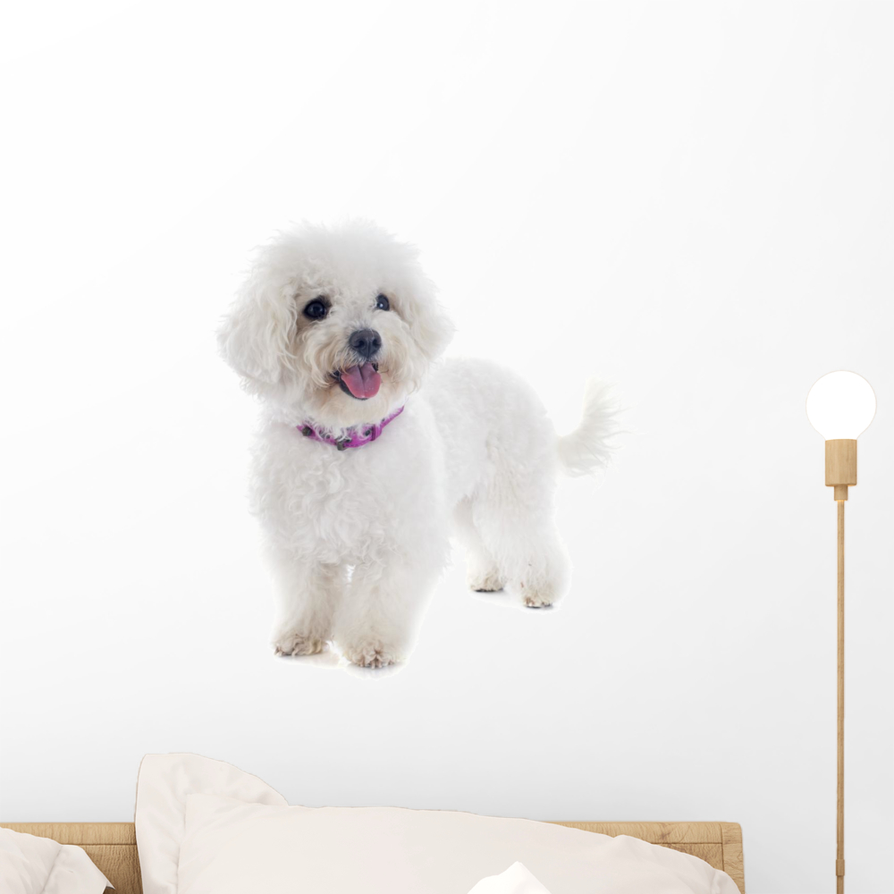Frise Sticker Bichon Frise Wall Decal Sticker By Wallmonkeys Vinyl Peel And Stick Graphic 18 In H X 14 In W