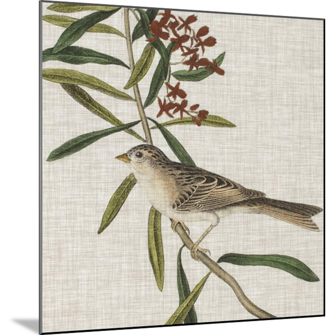 Avian Crop VII Wood Mounted Print Wall Art By John Audubon - Walmart