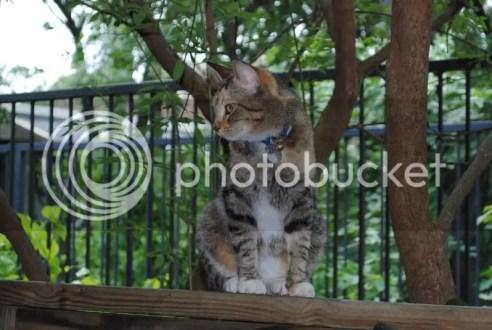 Resident Cat at College Street Pub