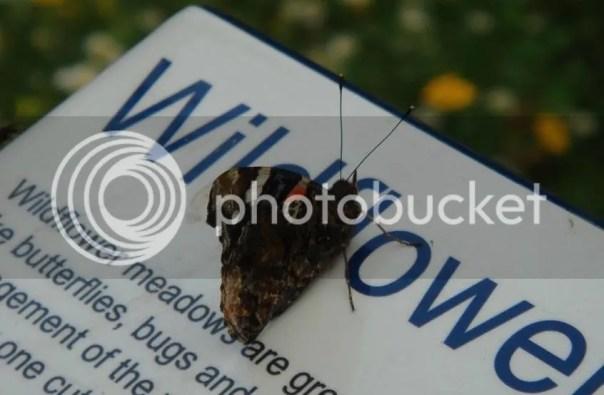 photo Butterfly_zpsbgu8ah77.jpg