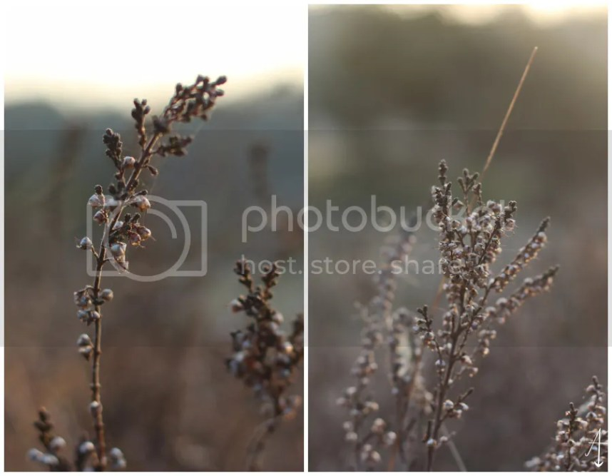 fotografie, foto's, foto, camera, canon, lifewithpictures, picture, pictures, photography