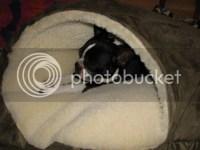 best... dog-bed.... EVER!!!