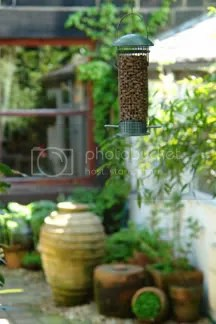 hanging bird feeder full of peanuts