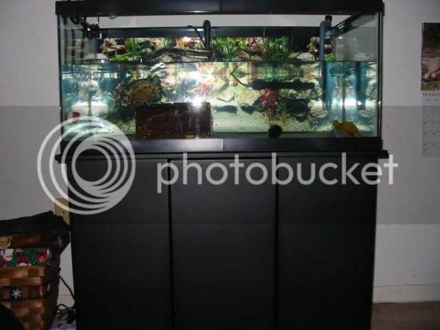 40 Gallon Breeder Stand   Habitats and Equipment   Turtle Forum