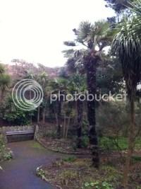 Alum Chine Tropical Gardens - Bournemouth - Hardy Tropicals UK