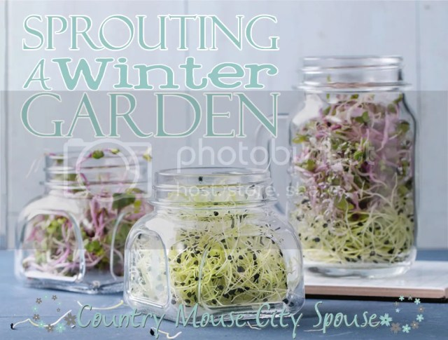 Sprouting a Winter Garden- Country Mouse City Spouse