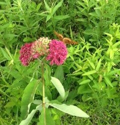 Photo-of-a-Butterfly-on-a-Plant